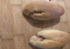 γεμιστά γλυκά ψωμάκια, γλυκά ψωμάκια