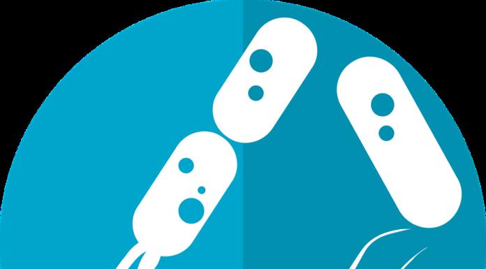 εντερικό μικροβίωμα, μικροβίωμα